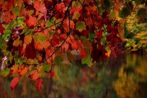 fall-red-tree-lake